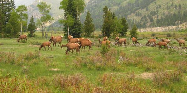 group of deer in a field
