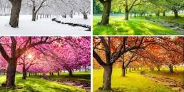 collage of trees in various seasons