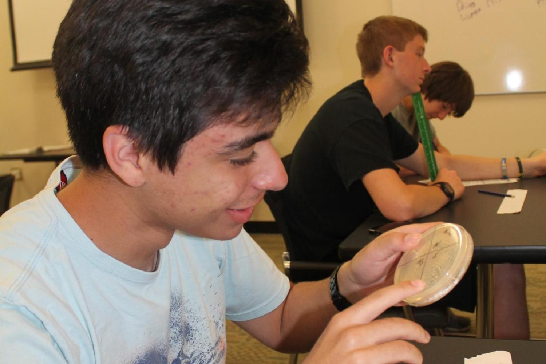 Boy examing petri dish