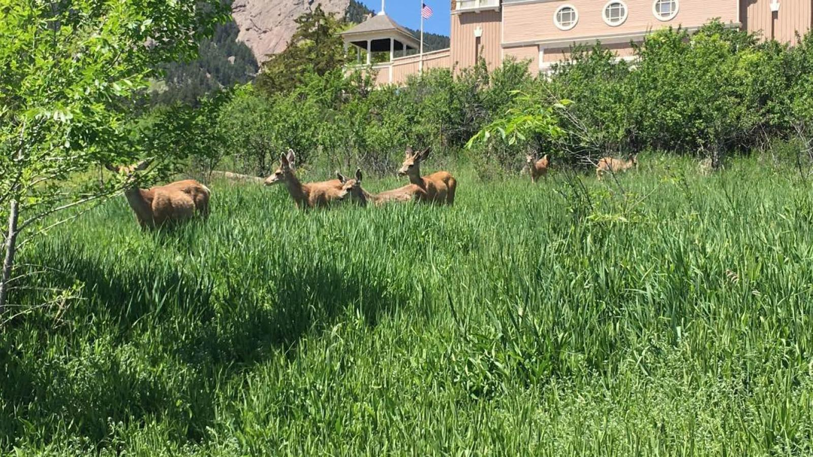 a small group of deer