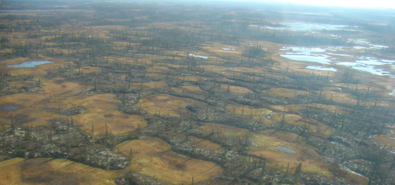 Permafrost peatland in Innoko National Wildlife Refuge in Alaska