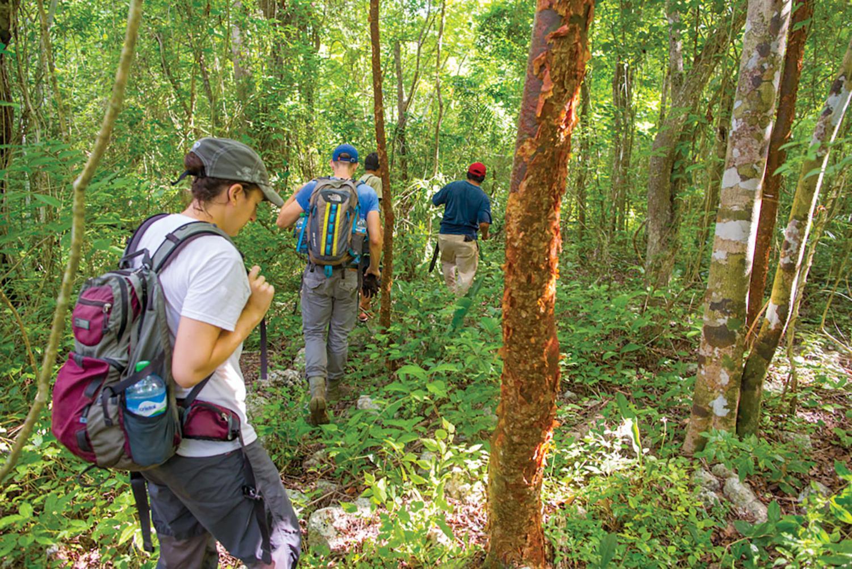 Team walking through the jungle