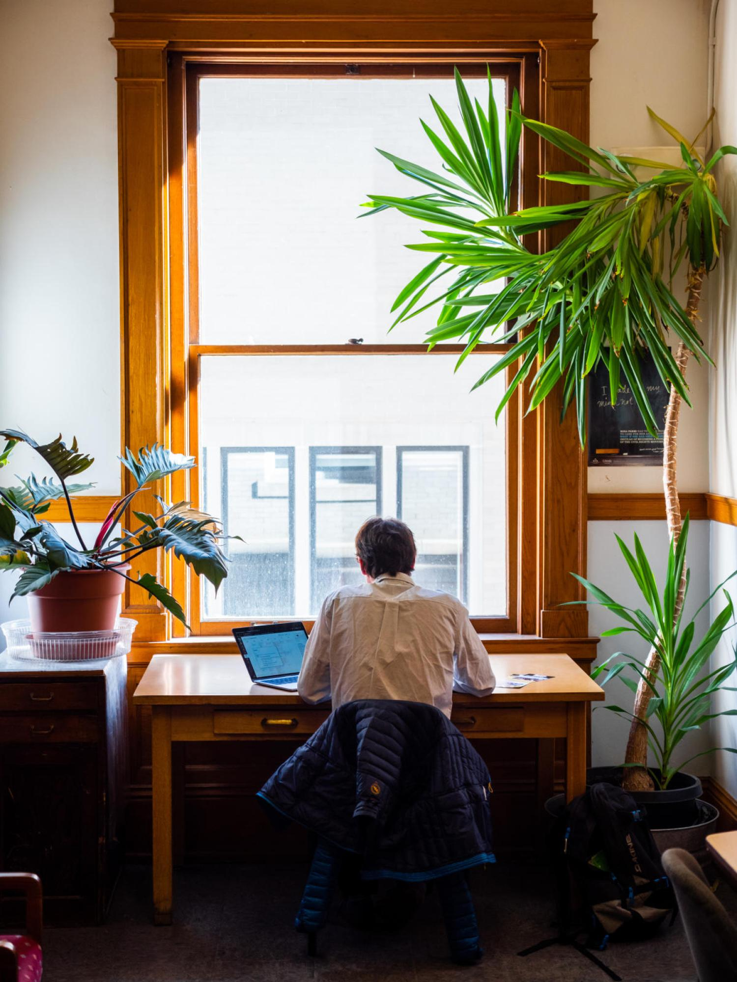 A student studying at a desk by a window and a plant