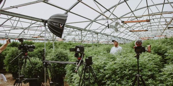 Person stands among plants with cameras and media equipment