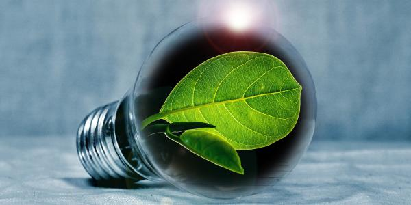 Graphic of lightbulb with leaf as light source