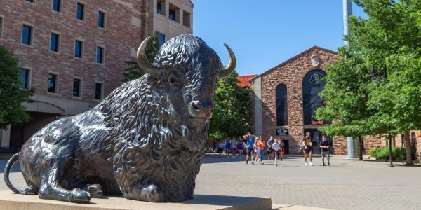 Buffalo statue at Folsom Field