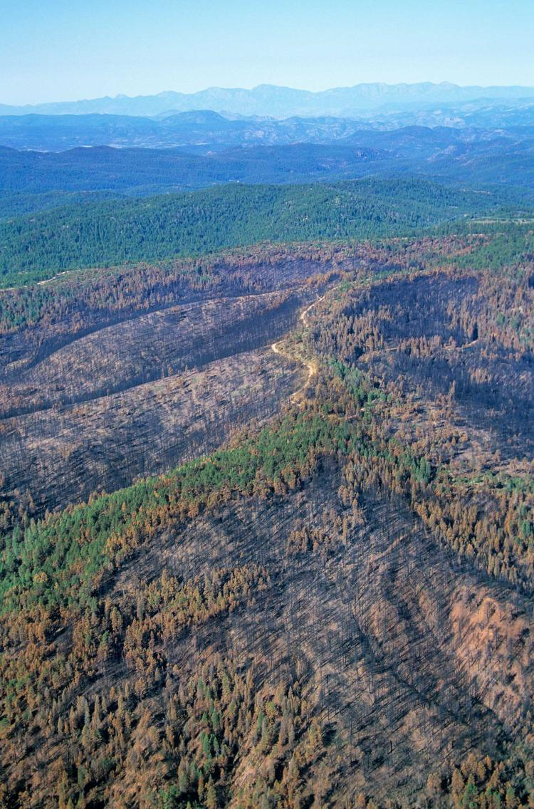 Alamy after a wildfire