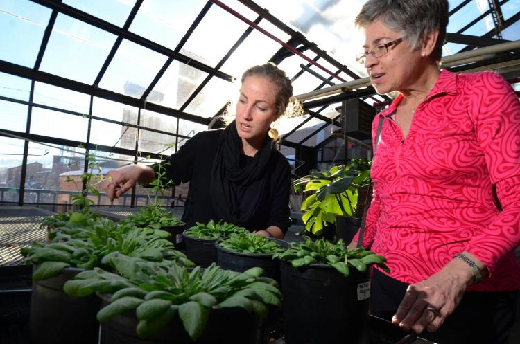 Two people in the Ramaly Greenhouse