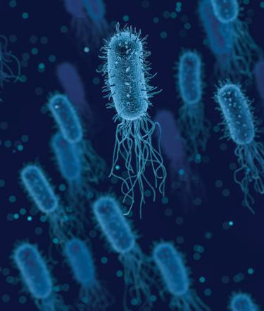 Closeup of bacteria