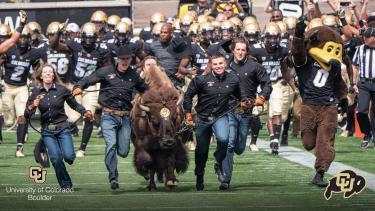 Ralphie and her handlers running Folsom Field