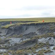 An Alfred Wegener Institute permafrost team inspects a massive thaw slump on the Yedoma coast of the Bykovsky Peninsula.