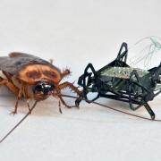 Cockroach and robot bug