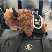 Ralphie on a suitcase