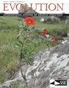 Petunia cover