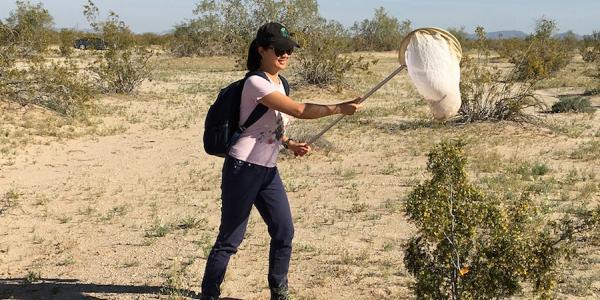 Julienne netting pollinators