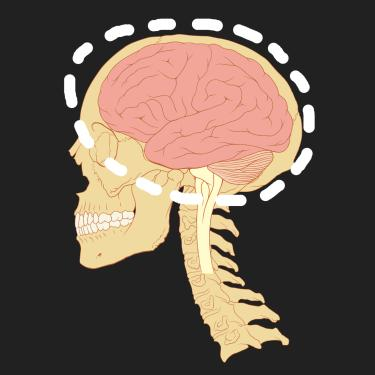 skull and brain graphic