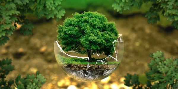 tree growing in a glass bubble