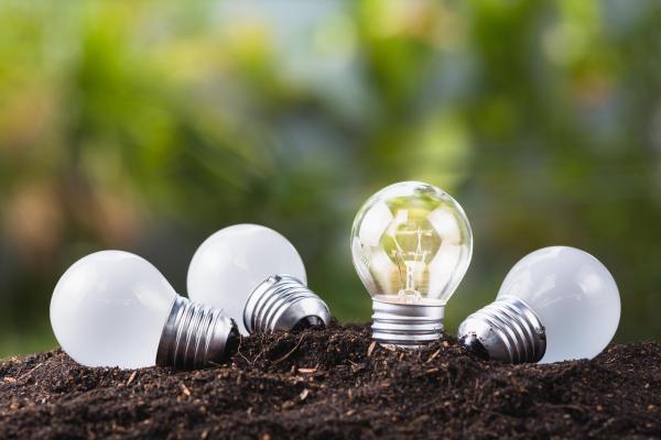 Lightbulbs in grass