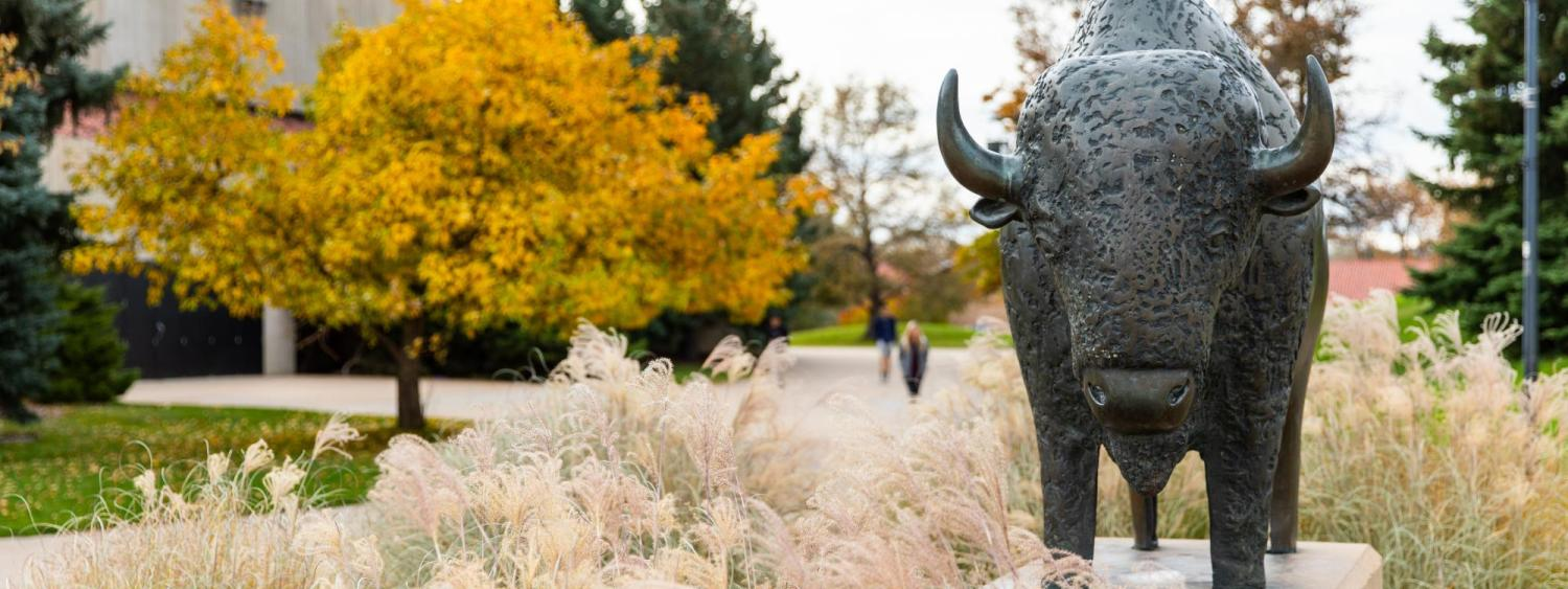 Buffalo statue on campus during fall
