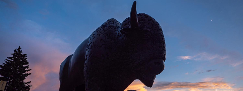herd mental health month buffalo silhouette
