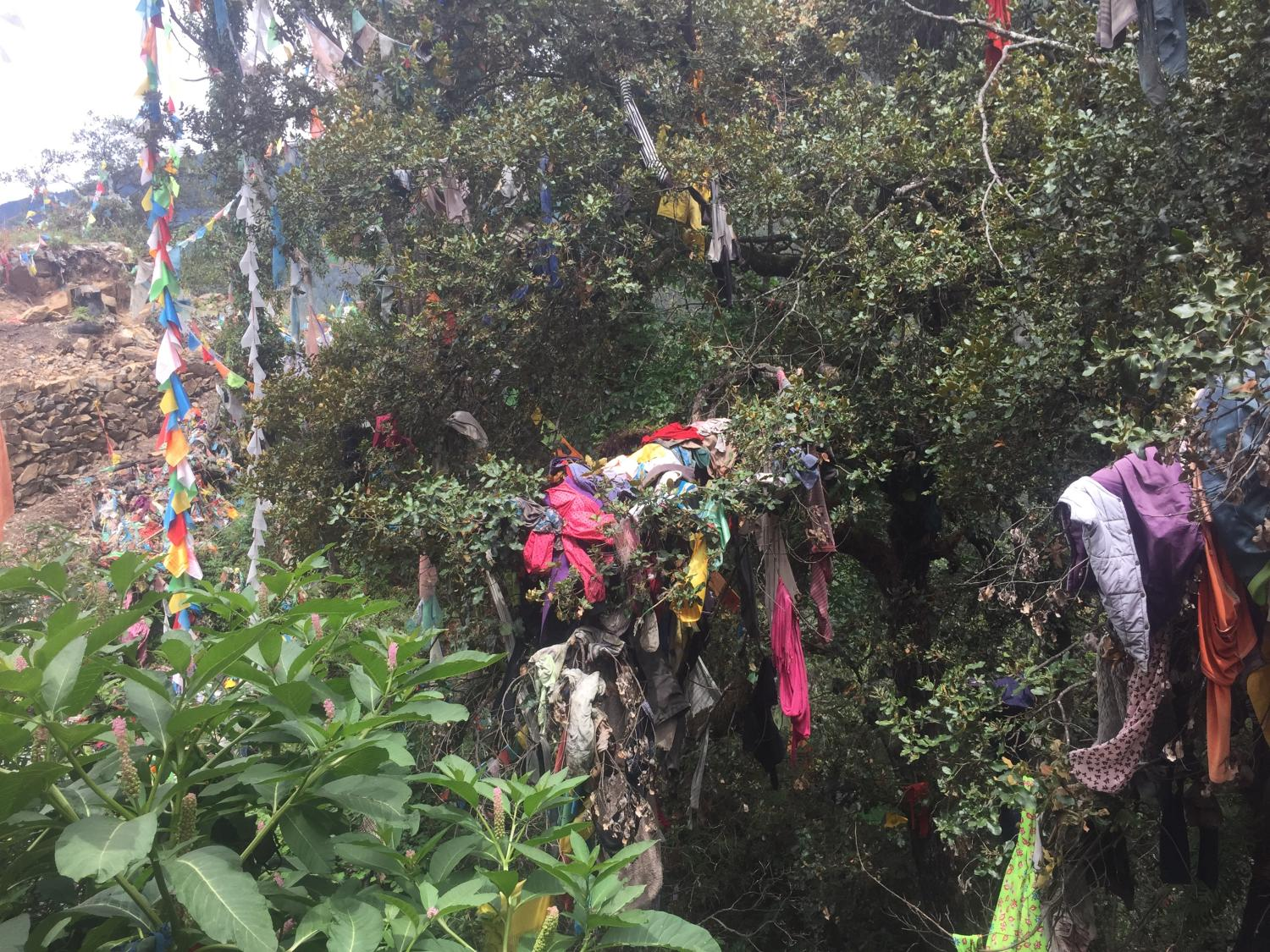 At Asela (lho 'od gsal la), another smaller pass, pilgrims hang many clothes – new chubas, sweaters, pants, face masks, shirts, etc. -- on trees. Some say these are offerings for dead relatives and friends who might need them in the bar do while others say that one's dead relatives follow one on the pilgrimage, and that by leaving the clothes there, the deceased are able to rest there rather than following for the whole journey.  Still others stated that they believed that the clothes are used for one