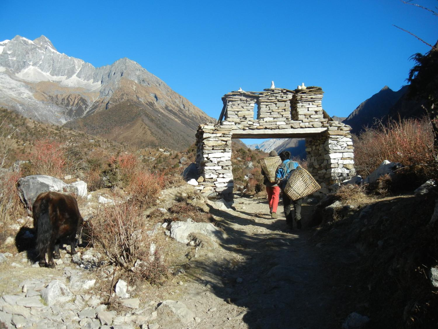 Firewood gatherers leaving the upper gate of Sama village while a yak grazes on the tundra