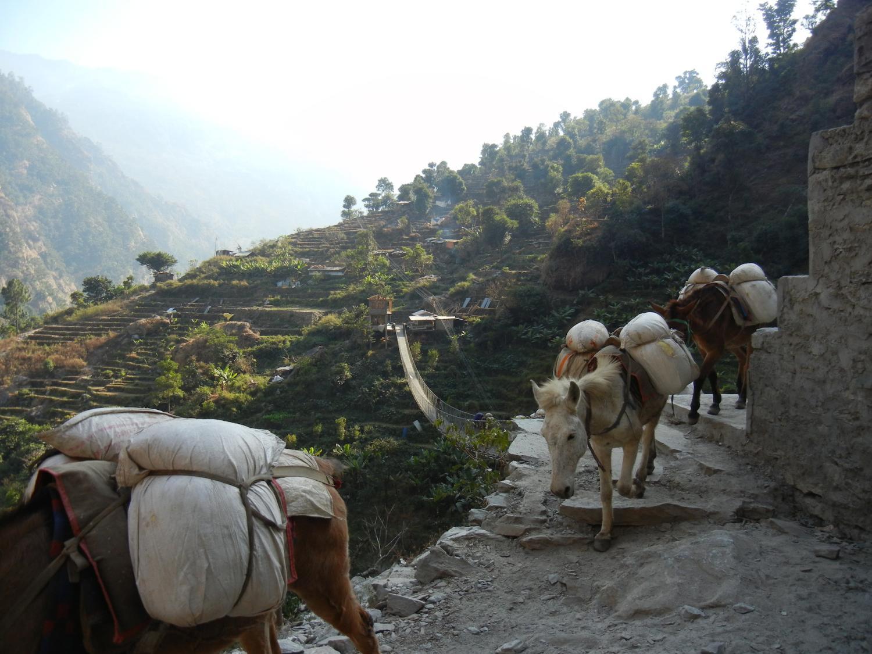 Mule train near Lhakpa, just below Nubri