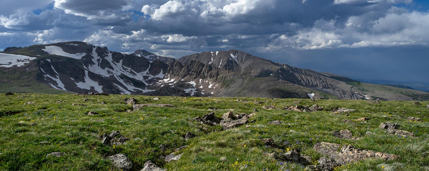 Afternoon light shines on an alpine dry meadow community