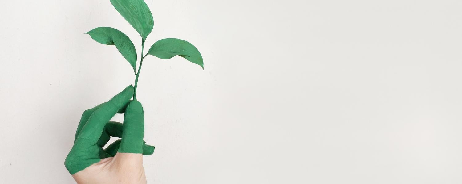 Green plant growing out of a person's hand