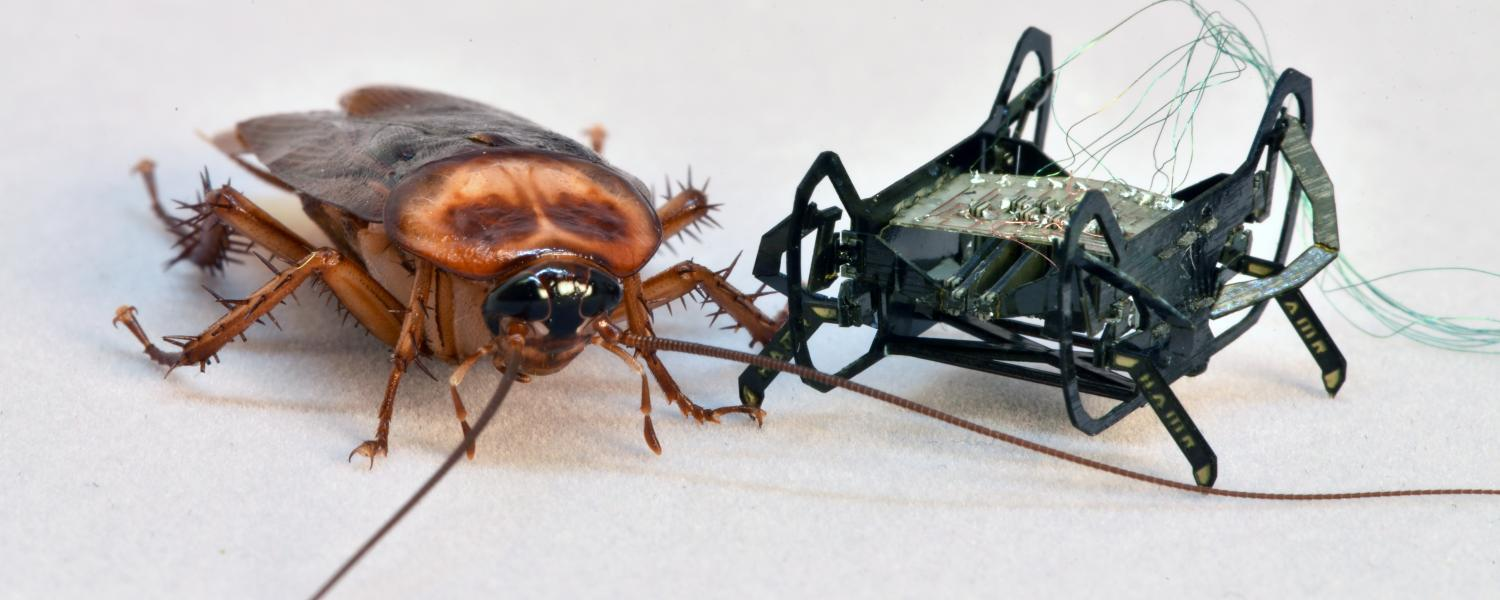 The HAMR-Jr robot poses next to a cockroach