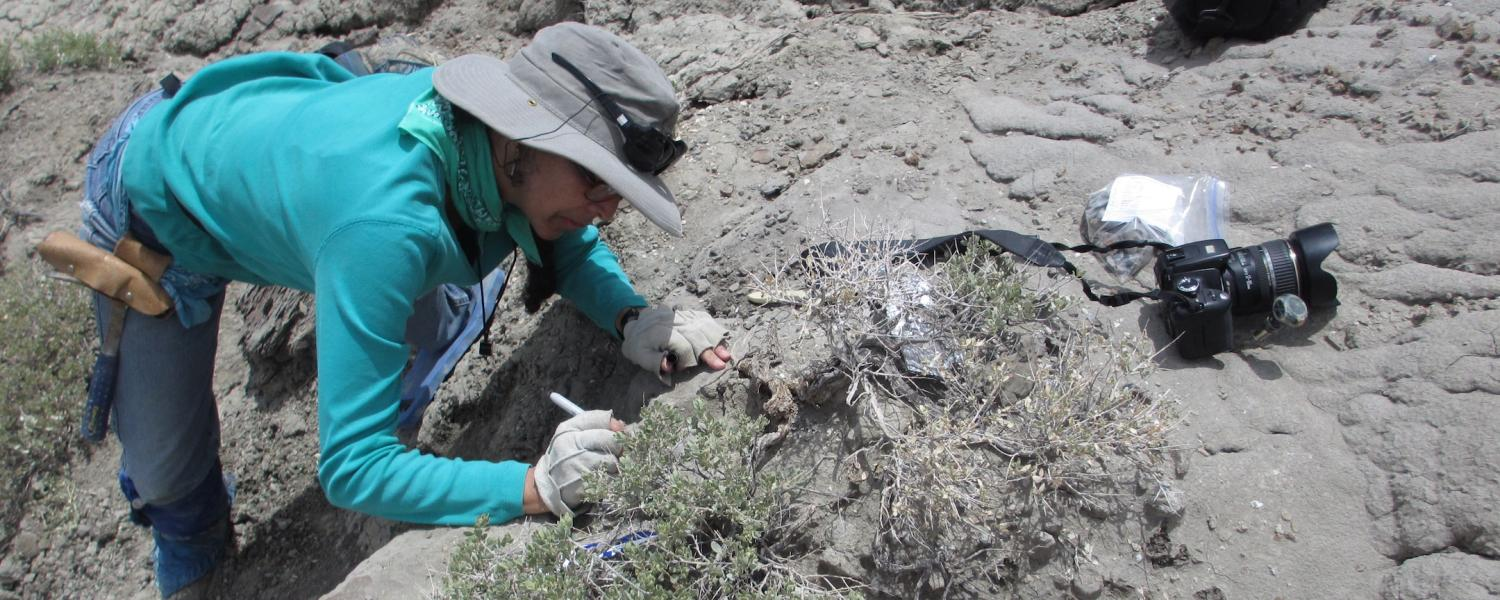 Karen Chin excavates fossilized dinosaur feces at Utah's Grand Staircase-Escalante National Monument