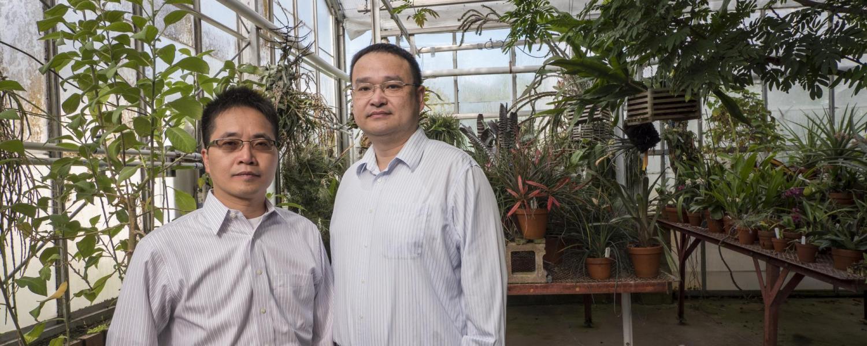 Ronggui Yang and Xiaobo Yin in greenhouse