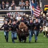 Ralphie and her handlers lead CU Football onto the field at the 2018 homecoming game