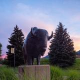 An image of the Ralphie statue with the Flatirons in the background