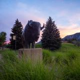 Ralphie statue at sunset