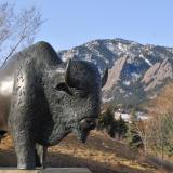 A buffalo sculpture on the CU Boulder campus