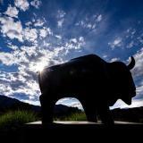buffalo sculpture on campus