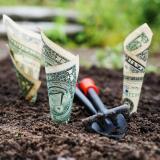 Growing dollar bills in the ground