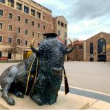 A buffalo statue with graduation regalia.