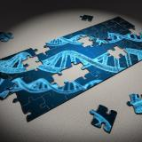 Puzzle pieces illustrating genetic material