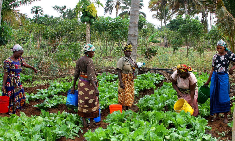 women farmers in Tanzania