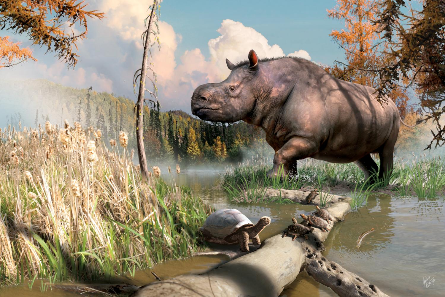 An artist's imagining of an ancient relative of today's rhinoceroses splashing through a stream next to turtles and fish in the Yukon.