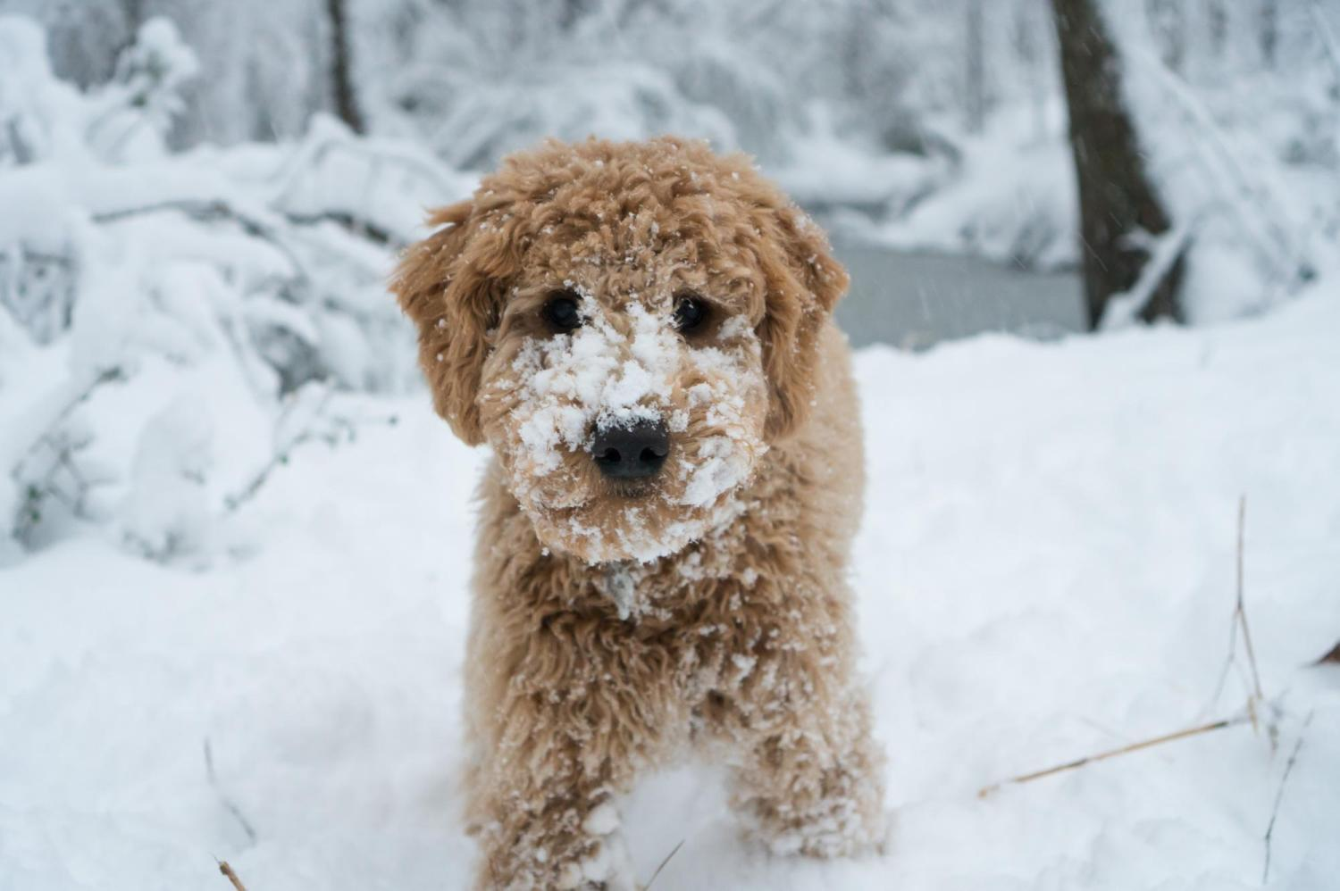 Toby plays in the snow