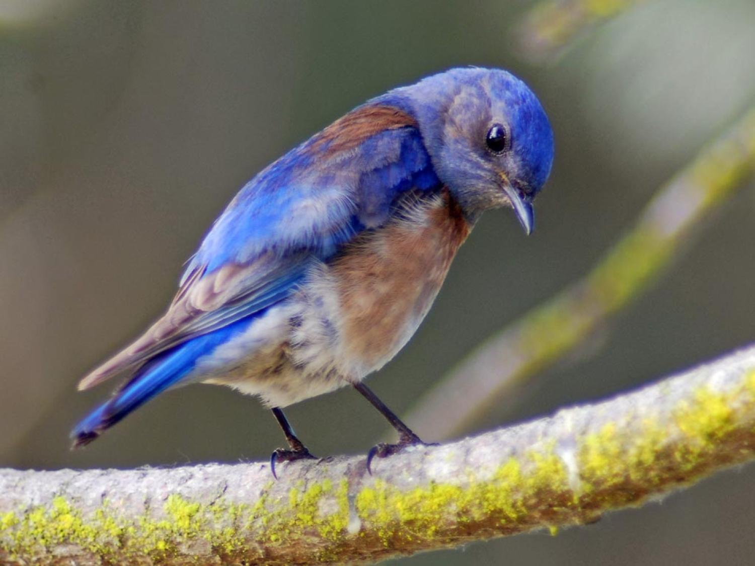 Noise pollution causes birds to have symptoms similar to PTSD