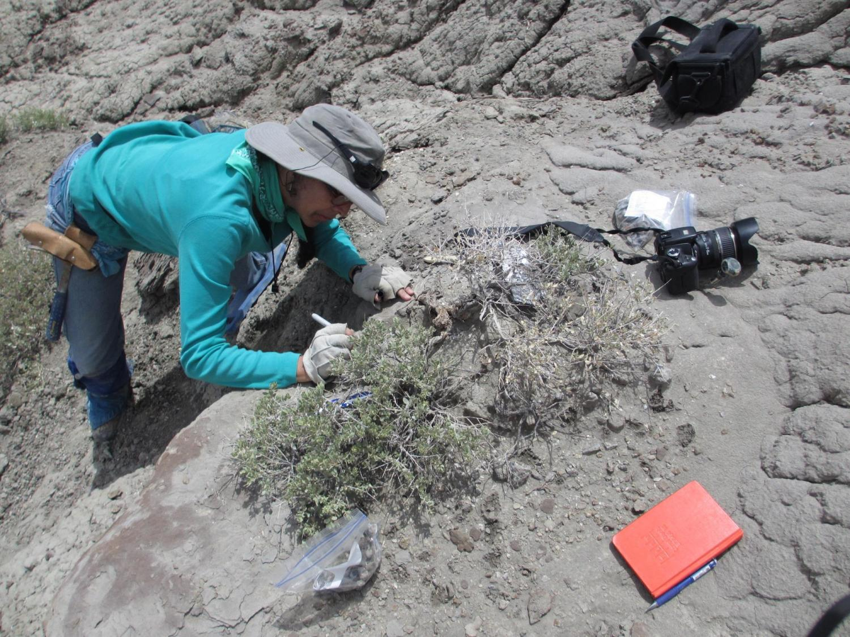 Karen Chin digging for fossils