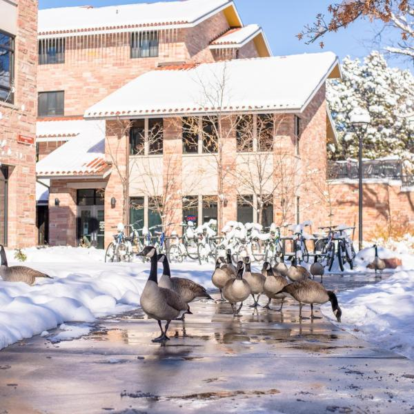 Snowy campus on Monday. Photo by Patrick Wine.