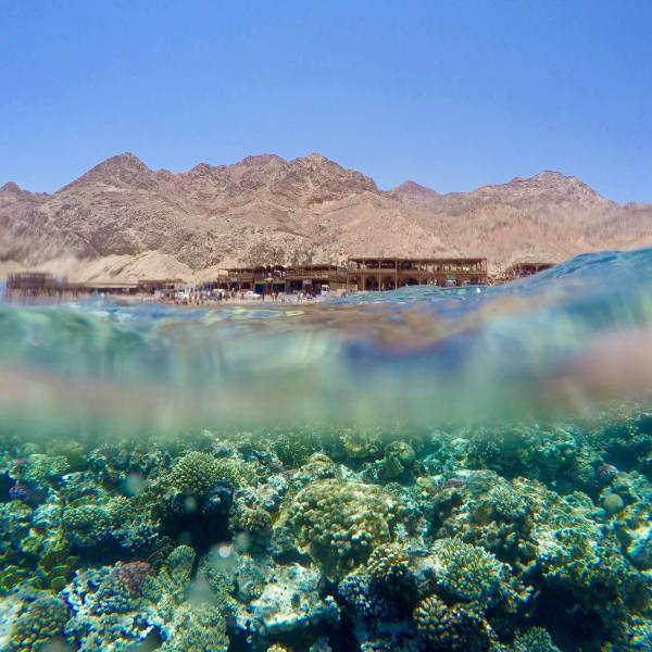 Dahab, Egypt (Photo by Erin Neale)