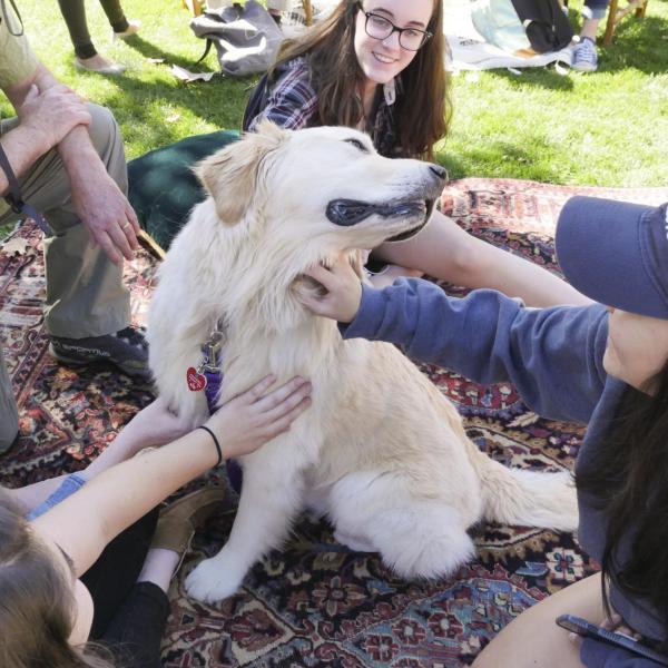 Students pet dog at the first-ever CU Boulder dog café