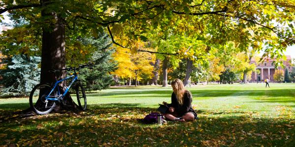 Student studies under a tree on campus
