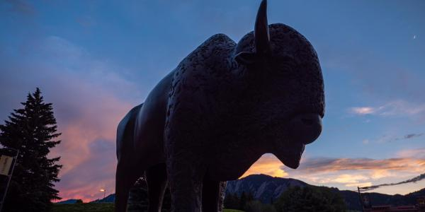 A Ralphie sculpture on the CU Boulder campus.